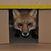 Foxindebox